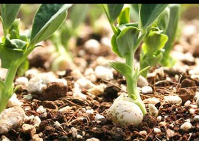organic fertilizer-80-tradeinfact